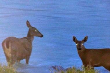 Una turista que paseaba en el Parque Nacional Los Glaciares fotografió a una hembra de huemul con su cría.