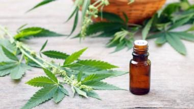 La norma prevé que se inicie un proceso de estudio e investigación del uso medicinal de la planta de Cannabis y sus tratamientos no convencionales, en la órbita del ministerio de Salud.