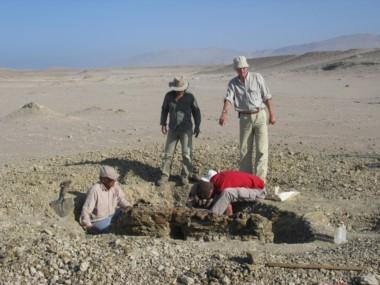 El fósil fue encontrado en la localidad de Media Luna en la Cuenca de Pisco, Perú. Foto de Giovanni Bianucci