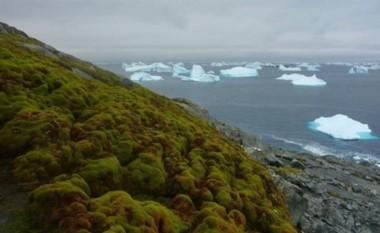 Un clima más cálido es el responsable que la Antártida cada vez esté más verde.