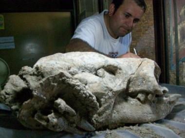 Los investigadores encontraron este cráneo de 65 centímetros