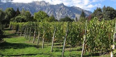 Se realiza la primera edición de Expo Vinos de la Patagonia, donde las mejores bodegas se unen con destacados cocineros de la región.