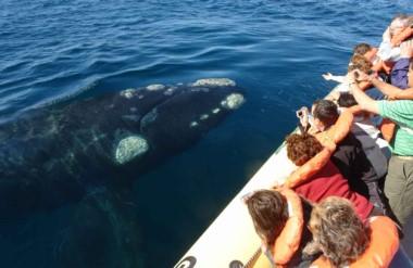 Expectativa renovada. Desde las 11 quedará abierta la temporada de ballenas en Puerto Pirámides.