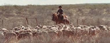 La majada. Tras salir de la Emergencia Agropecuaria, el stock ovino comenzó a recuperarse aunque aún no alcanzó los valores históricos para la provincia.