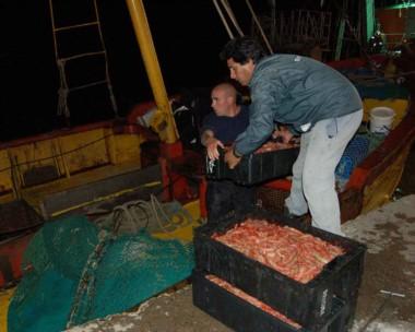 Por dia se descargan cerca de 100 kilos de langostinos frescos en Camarones que van hacia otros lugares.