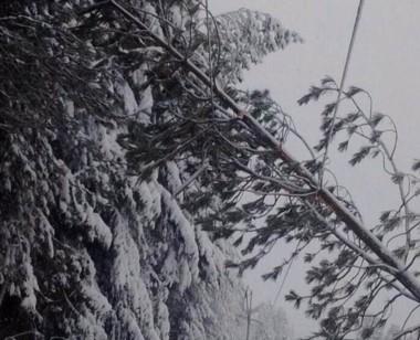 La caída de árboles produjo complicaciones en el sistema eléctrico.