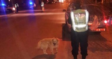 En Gaiman también trabajó personal de la Policía Montada. Se operó en los accesos y vías principales.
