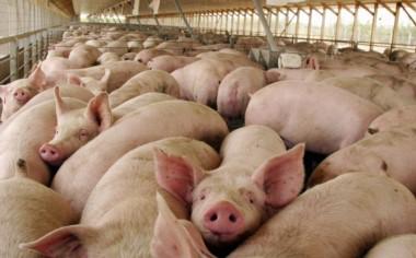 La Cámara Federal revocó el fallo que frenaba el ingreso de carne de cerdo a Chubut.