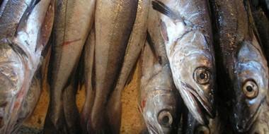 La merluza es uno de los pescados que se comercializa en Chubut y le aumentará el reintegro.