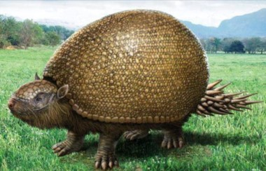 El Gliptodonte es un género extinto de un gran mamífero acorazado emparentado con los armadillos.