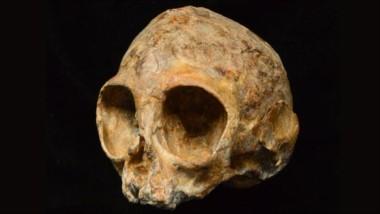 Este es el cráneo del tamaño de un limón de un bebé de simio apodado Alesi, que vivió en una selva en Kenia hace unos 13 millones de años.