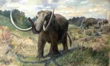 Los poderosos mastodontes habitaron suelo bonaerense hace 1 millón de años. Estos animales llegaron a pesar hasta 8 toneladas y medir cerca de 4 metros de altura.