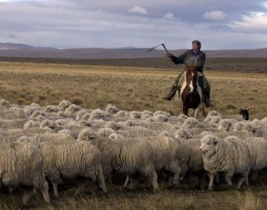 Una buena para el sector ganadero de la provincia, luego de los efectos que dejó la inclemencia climática.