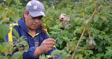 Eduardo Medina fue el cosechero que sumó mayor puntaje en relación, rendimiento y calidad de fruta.