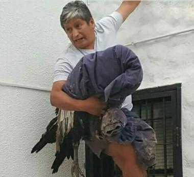 : Jorge Ruiz en el momento que sacan el cóndor del patio donde había caído