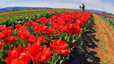 Las actividades, desarrolladas en dos jornadas, incluyeron  una visita al campo de tulipanes en Trevelin.