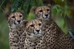 La Tierra perdió el 60% de sus animales salvajes en 44 años por la presión del hombre.
