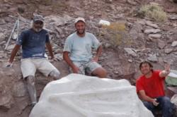 Descubren una nueva especie de dinosaurio de 110 millones de años de antigüedad en Argentina. Lavocatisaurus agrioensis. Ilustración @Gabrielluislio