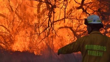Las llamas afectaron árboles y el viento favoreció a la expansión del fuego por todo un potrero.