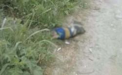 Proteccionistas independientes de Jujuy denunciaron la matanza de un perrito que tenía puesta una camiseta de Boca.