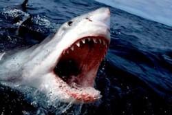 Una niña de 12 años y una mujer de 46 resultaron gravemente heridas hace dos meses en sendos ataques de tiburón que se registraron con 24 horas de intervalo.