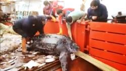 Hace unos días, un barco pesquero de Puerto Madryn capturó en sus redes y luego devolvió al mar una enorme tortuga laúd.