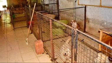 Un total de 17 perros de raza estaban alojados en el lugar en pésimas condiciones de higiene.