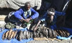 Los clientes del mercado dominical de Kumarikata, un pueblo de Assam, gran estado del noreste de India, aprecian más la rata que el pollo o el cerdo.
