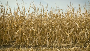 Se habla de la peor sequía de los últimos 44 años en la Argentina.