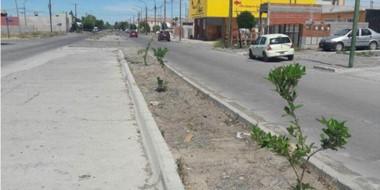 Personal municipal de la Secretaría de Producción y Medio Ambiente plantó árboles para embellecer el sector.