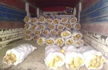 Ilegales. Unas cien bolsas de papa que iban en el acoplado del camión secuestrado en la tarde de la víspera.