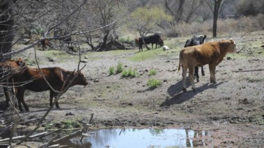 La tierra seca, el agua escasa... Problema muy delicado para la actividad agropecuaria. (foto gentileza La Voz).