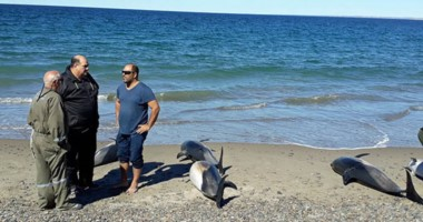 Una imagen que lo dice todo. Los delfines murieron en la costa de El Doradillo. Investigan las causas.