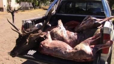 Al revisar la caja de utilitario aparecieron tres ciervos faenados Al revisar la caja de utilitario aparecieron tres ciervos faenados (uno de gran porte, cuya cabeza había sido prolijamente separada).