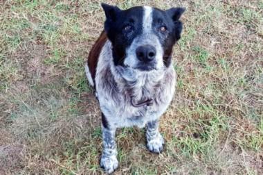 Max, el viejo perrito de 17 años, se mantuvo estoicamente junto a la niña durante toda la noche.