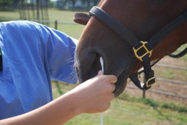 La Dirección de Desarrollo Pecuari reportó un animal muerto por el brote, aunque en las intendencias hablan de al menos seis caballos.