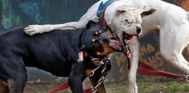 """En Trelew la tenencia de mascotas está regulada por la Ordenanza 11.824, que establece la calificación de """"perros potencialmente peligrosos""""."""