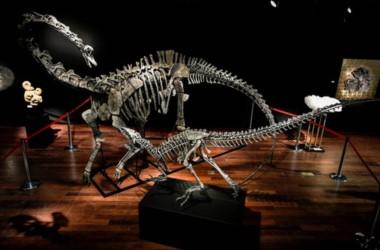 Los esqueletos de un allosaurus y de un diplodocus serán subastados el miércoles en París.