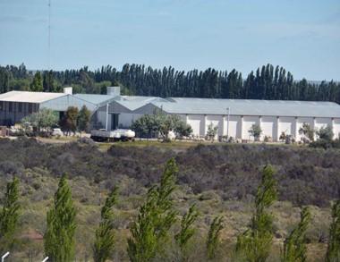 Desde Fuhrmann exportan el 99% de lo que producen en Trelew.