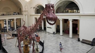 El Field Museum reemplazó una de sus atracciones más icónicas: Sue, el esqueleto original de T. rex, por el Titanosaurio Patagónico.