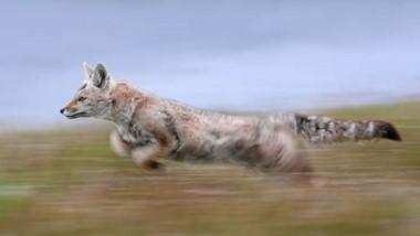 Todas las obras que expone Darío Podestá en esta muestra son fotos de animales silvestres en libertad.