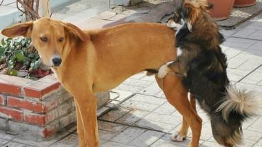 Jorge Nemesio habría dicho que las mujeres tiene sexo en cualquier lugar como los perros. (Archivo)