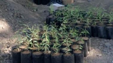 Trelew recibió de Corfo unos 500 ejemplares de árboles. Es para contribuir a la forestación de la ciudad.