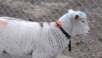 """""""Estos mapas se cargan en el collar que llevan los animales y cada productor podría establecer los límites de los alambrados virtuales desde cualquier dispositivo móvil""""."""