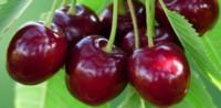 El Ministerio de Agroindustria oficializó el protocolo de calidad para