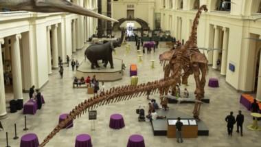 El Museo Field, de Chicago,con casi 200 años, es uno de los museos más antiguos de Estados Unidos y es uno de los más visitados.