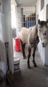 El caballo comenzó a ser atendido y recupera sus fuerzas. (Facebook)