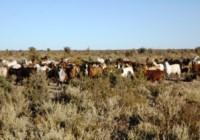 El estudio involucró la región productiva del Caldenal y del Río Colorado (foto INTA)