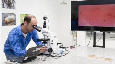Microscopio. El doctor Diego Libkind dirigió la investigación sobre la levadura patagónica.