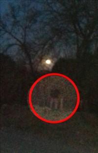 En el centro del círculo, la supuesta imagen del fantasma. (El Tribuno)